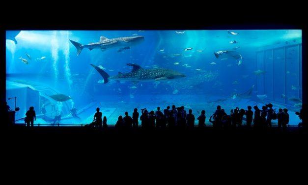 Aquarium – Diskussionen führen
